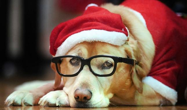 beestige kerstkaarten met foto's