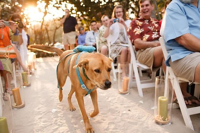 hond als ringdrager - ideeën huwelijk