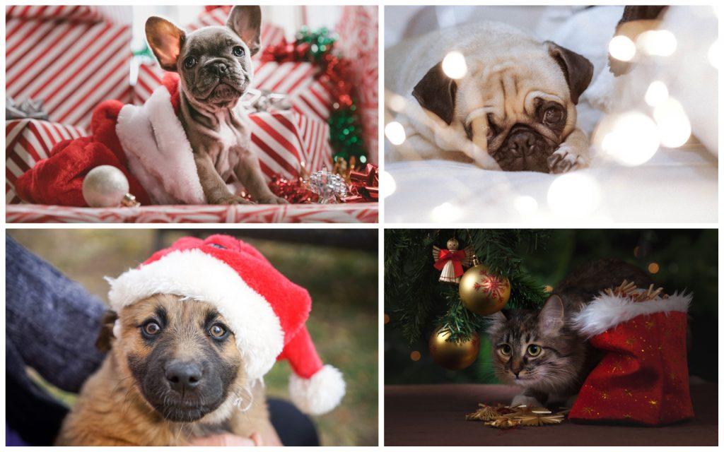 kerstfoto met huisdier