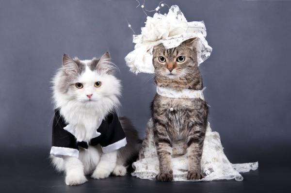 huwelijksuitnodiging voor katten
