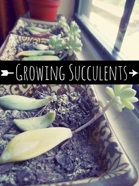 groei je eigen aandenken