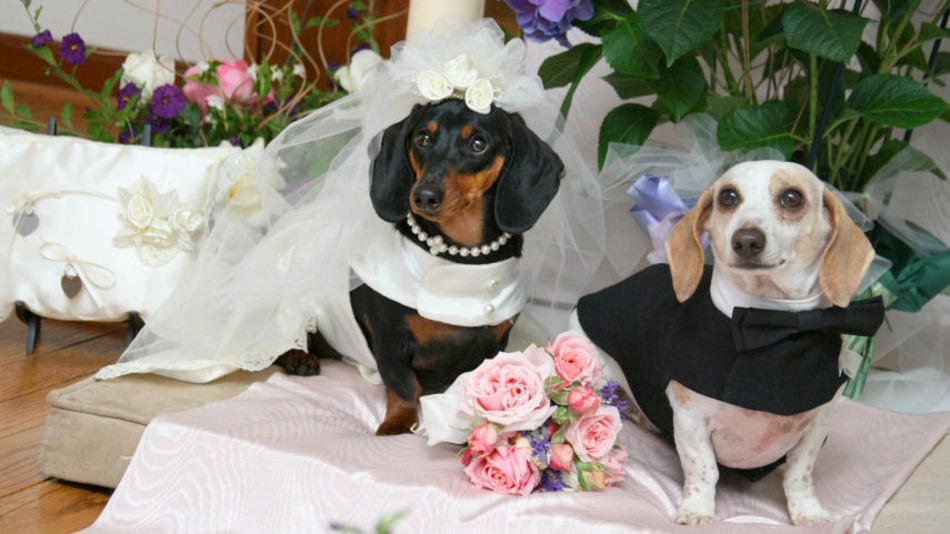 huwelijksfoto honden