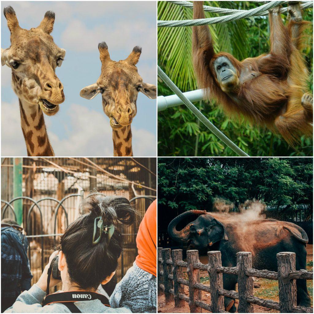 een namiddagje zoo als verjaardagsfeestje